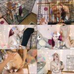 PuppyGirlfriend – Puppygirl in heat: blowjob & doggystyle FullHD 1080p